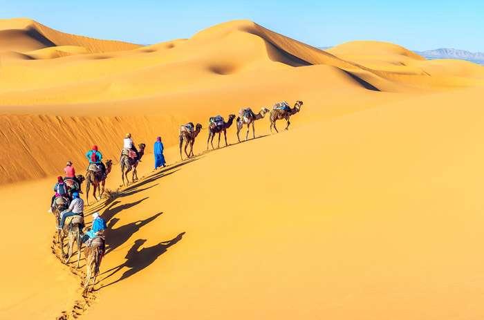 Camel caravan in the beautiful Sahara Desert Morocco