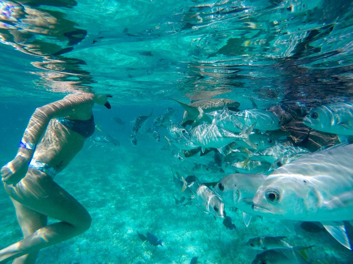 Swimming with fish in Hol Chan Marine Reserve