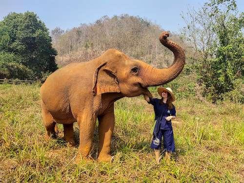 Intimate elephant feeding
