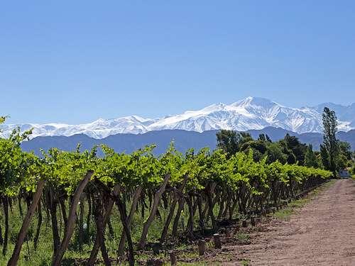 Vineyard in Mendoza Argentina itinerary