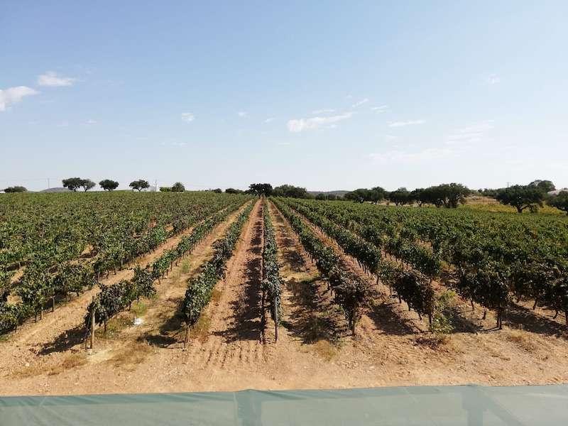 Alentejo winery Portugal