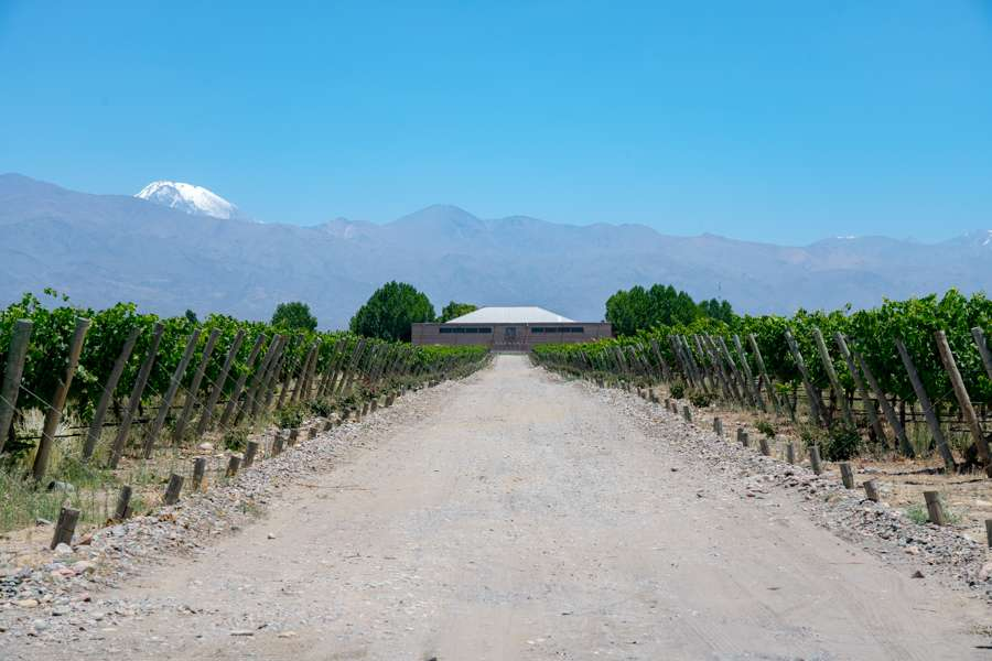 Beautiful vineyard in Mendoza